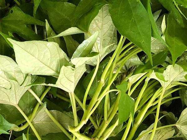 Sweet Potato Leaf (250g)