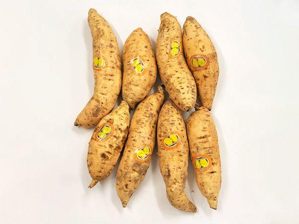 Cilembu Sweet Potato