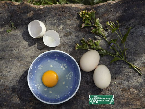 Free Range Non Fertilize Chicken Eggs (6pcs)
