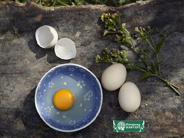 Free Range Non Fertilize Chicken Eggs (6pcs)