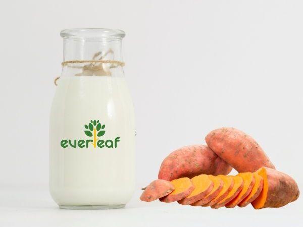 100% Organic Synbiotic Soy Vegan Yogurt (Sweet Potato)