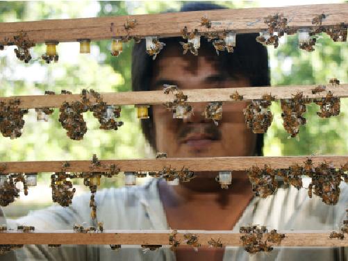 Eco Bee Shop